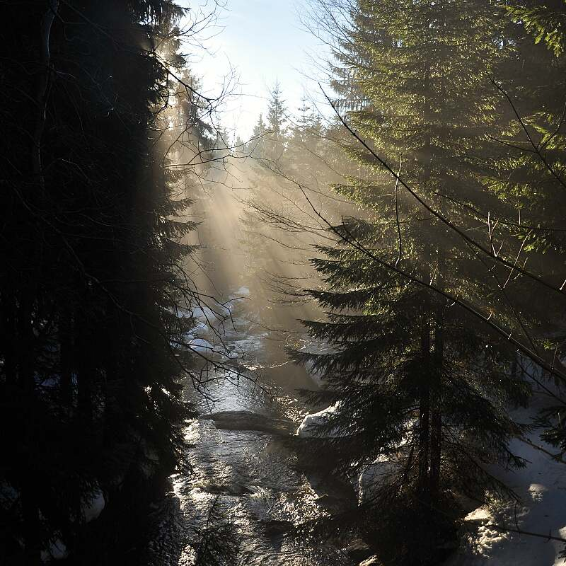 Kamenice, les a sluneční paprsky, slušný hérečky...